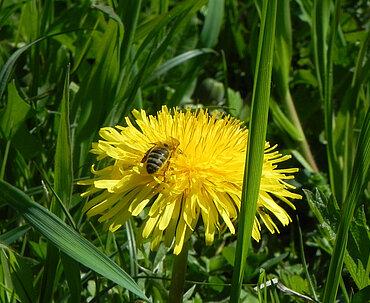 Pferdehof Trausner Honigbiene