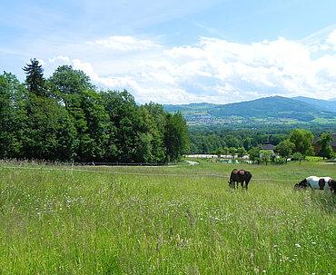 Pferdehof Trausner Weide